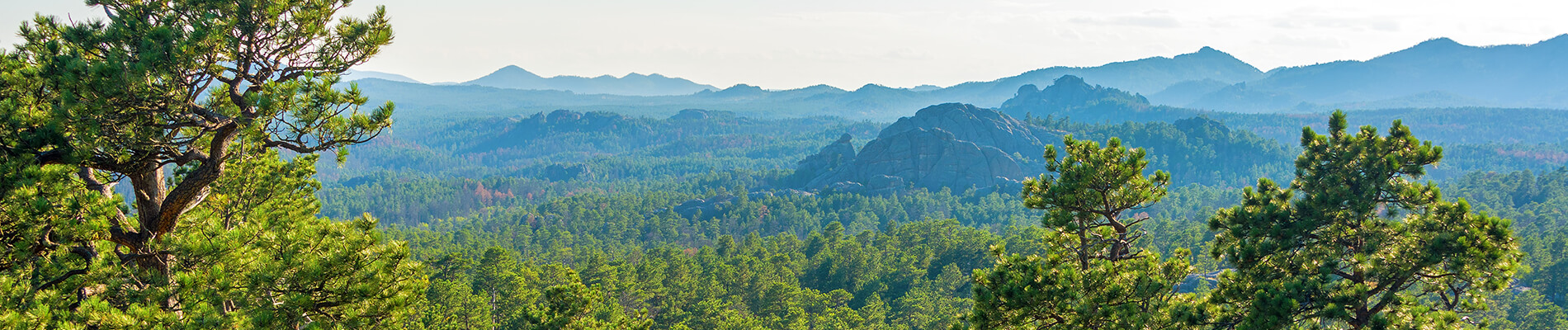 Landscape of the Black Hills